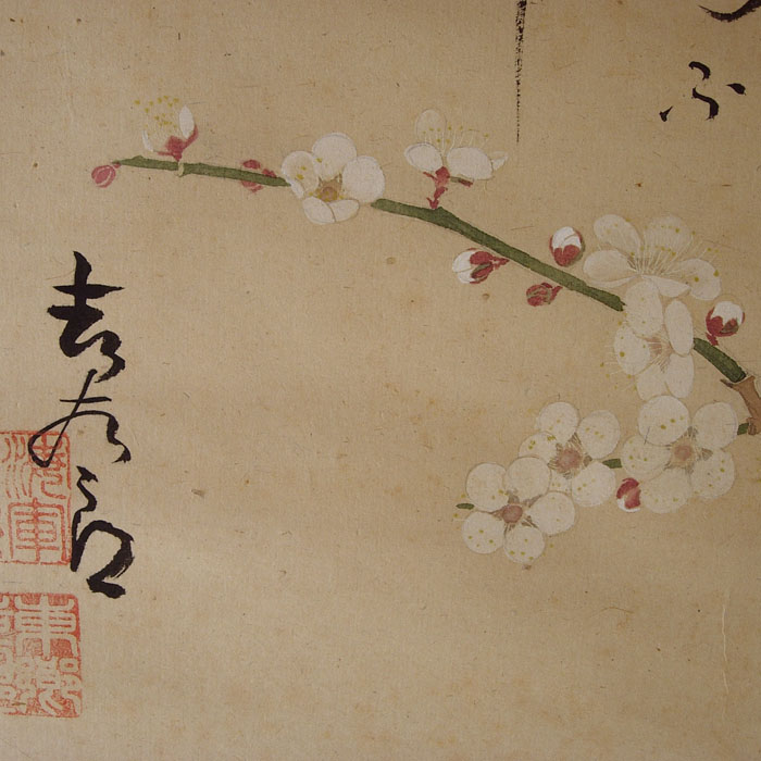 04FU111 Fleurs de prunier