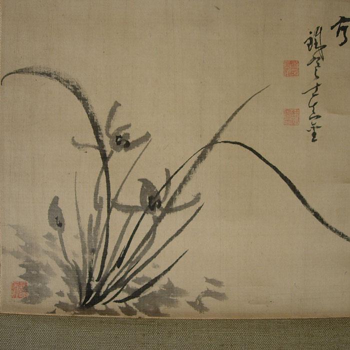 04FU117 Orchidées